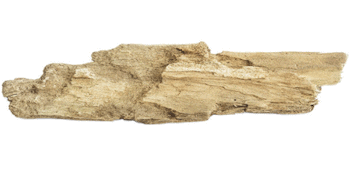 Clean the driftwood first