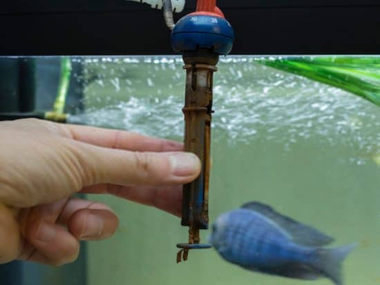 How to Tell If the Aquarium Heater Is Broken