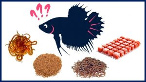 What Exactly Betta Eat to getting Nutrition